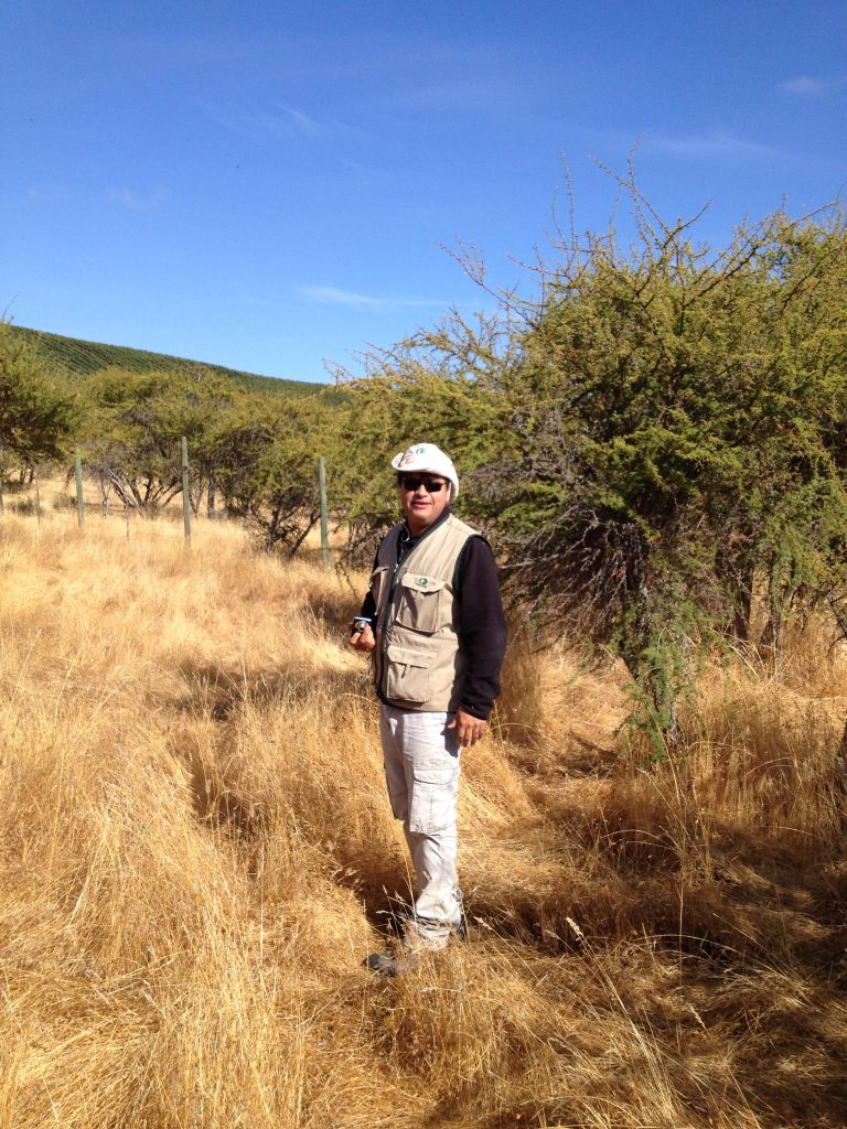 Alvaro in a trial of pasture in natural growth of leguminous tree species