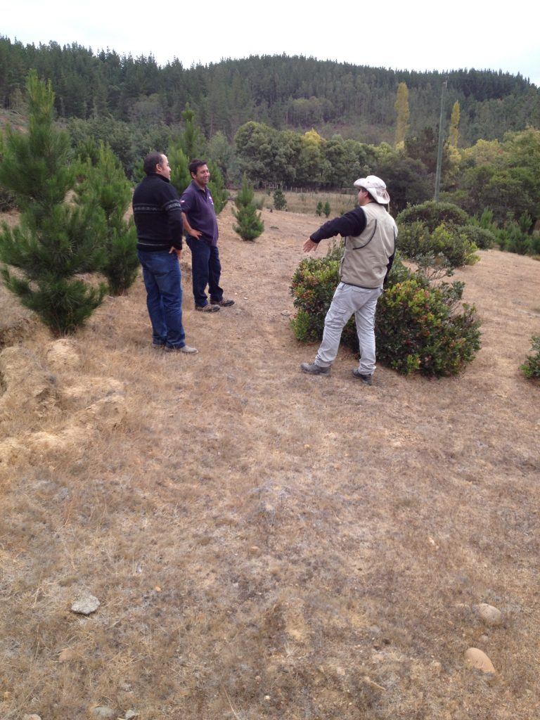 Alejandro and his team discussing their on-farm tree-pasture trials