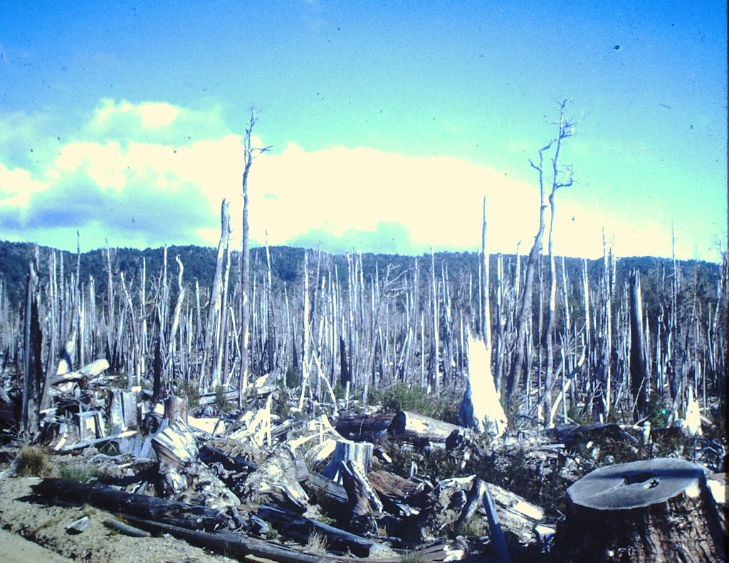 Cut over and burned native forest in southern Chile (1968)