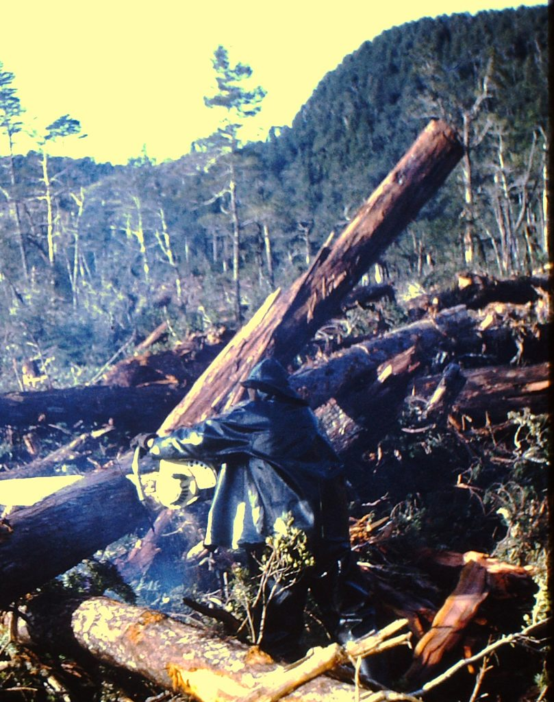 Cut over native forest in southern Chile (1968)